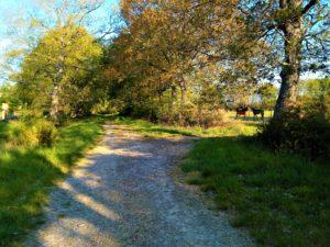 chemin randonnée
